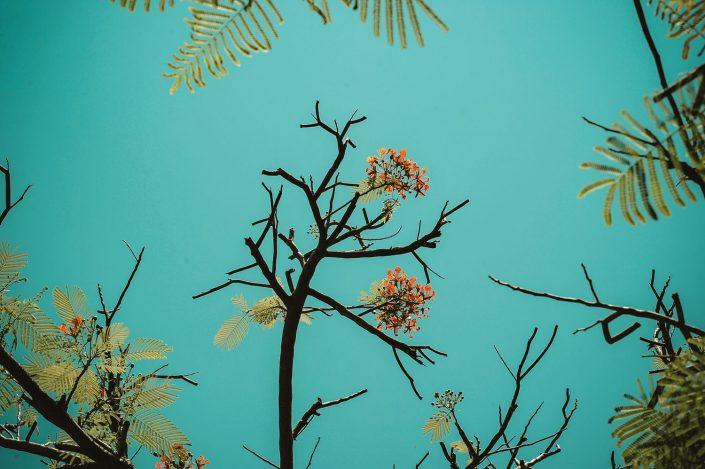 Via lecta et le co-développement : fleurir, ensemble